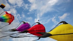 Soaring bright kite four fishes in blue sky at summer day Stock Footage