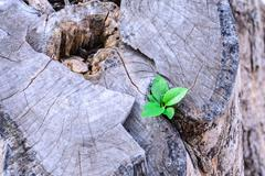 Plant growing on old tree stump, business concept. Stock Photos
