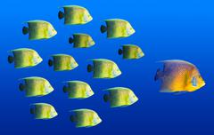 Leadership concept - big fish leading school of tropical fishes Stock Photos