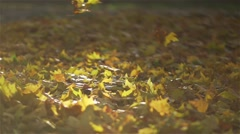 Autumn leaves fall to the super slow motion on a bed of fallen leaves Stock Footage