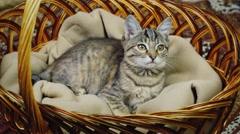 Kitten sitting in a basket Stock Footage