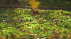 autumn leaves fall to the super slow motion on green grass - stock footage