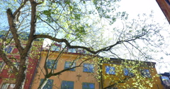 European house and tree in bright sunshine Stock Footage