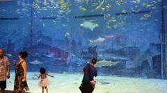 Visitors to the Beijing Zoo Oceanarium. It is the largest Oceanarium in China. Stock Footage