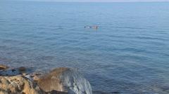 Man Floating In Dead Sea Stock Footage