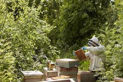 A beekeeper inspecting the bee hives in an allottment garden plot. Stock Photos