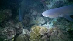 shark school night - stock footage