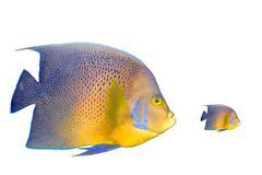 Big fish chasing small fish - stock photo