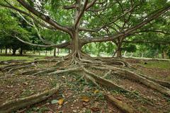 Tree roots - stock photo