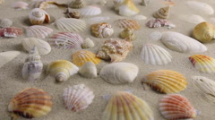 Wind blowing on the sand and opening seashells Stock Footage