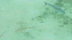 shark pool - stock footage