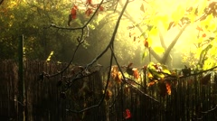 4K Romantic Autumn Morning in Small Garden 4 stylized Stock Footage