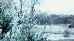 The first snow falls on a tree Stock Footage