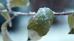 The first snow falls on leaves on a tree Stock Footage