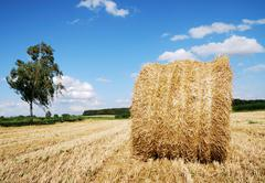 Bale of straw Stock Photos