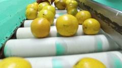 Oranges on a conveyor belt Stock Footage