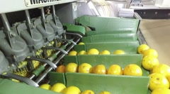 Florida oranges being squeezed into orange juice Stock Footage