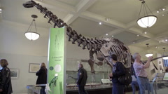 Tall Brachiosaurus skeleton, dinosaur fossils American Museum of Natural History Stock Footage
