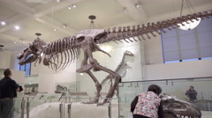 Tyrannosaurus Rex skull full skeleton Museum of Natural History dinosaurs 4K Stock Footage