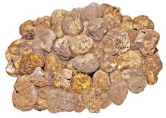 White truffles Stock Photos