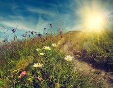 Daisy flowers on the mountain tableland Stock Photos