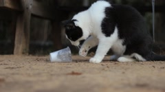 Smart Cat Drinking Milk Using His Paws from a Plastic Cup Stock Footage