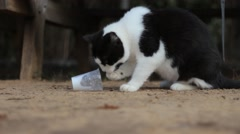 Cat Stealing Milk with is Paws from a Plastic Cup Stock Footage