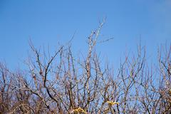 Bare tree branches against the blue sky Stock Photos