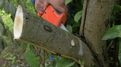 Electric power saw cutting off tree brunch Stock Footage