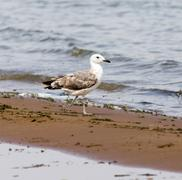 Gull on the lake - stock photo