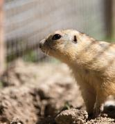 Gopher at the zoo Stock Photos