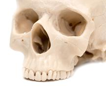 human skull on a white background - stock photo