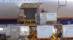 Cargo unloading of the plane at airport Stock Footage