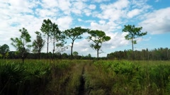 time lapse of sunny open wilderness area of florida - stock footage