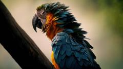 Parrot Fluffs Its Feathers And Squawks - stock footage