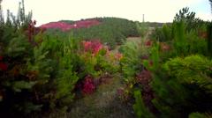 Walking in coniferous forest Stock Footage