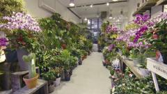 Garden shop, displaying orchids, cacti and many other varieties of plants Stock Footage