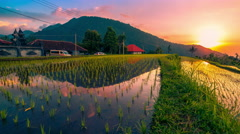 4K Timelapse. Sunset over the rice fields reflected in the water Stock Footage