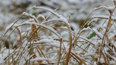 winter snow frozen grass nature dry background - stock footage