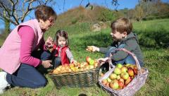 Children and senior woman putting apples inside of basket Stock Footage