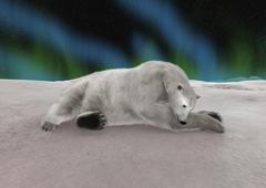 Polar Bear Resting Stock Illustration