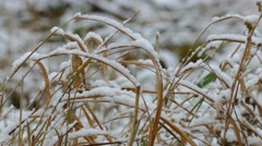 Winter snow frozen dry grass background nature Stock Footage