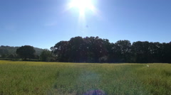 English Summer Sun With Large Lens Flare Stock Footage