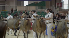 Stock Video Footage of Cattle being judged at Royal Winter Fair