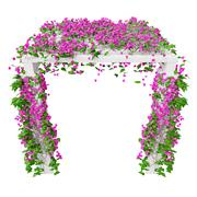 Pink climbing flowers bougainvillea Stock Illustration