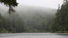 Foggy green lush lake nature Stock Footage