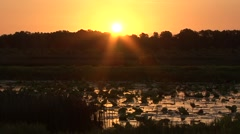 Sunset over wetlands - stock footage