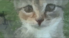 Live Painting. Cat Looking In Camera Stock Footage