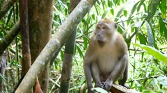 4k monkey jungle close up wildlife free animals outdoors care primate ape - stock footage
