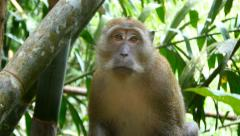 4k monkey wildlife free animals outdoors care primate ape jungle close up - stock footage